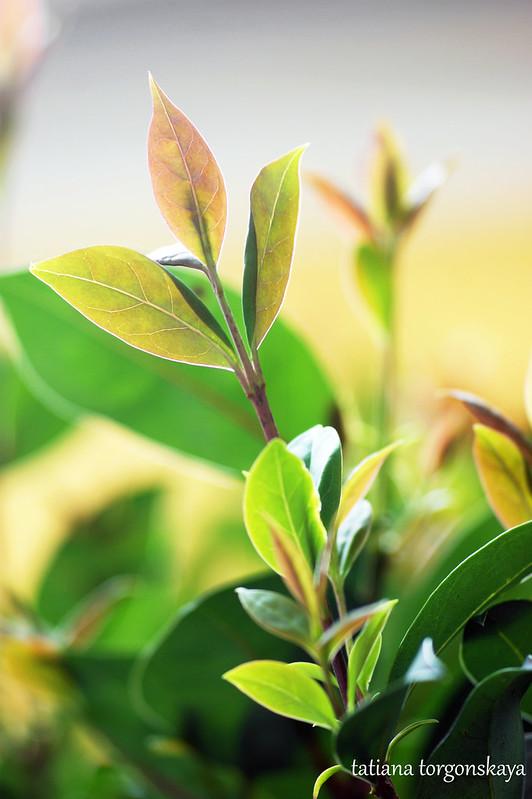 Свежая листва