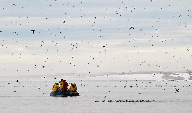 Zodiac and birds with Quark Expeditions (photo courtesy of Phil Wickens)