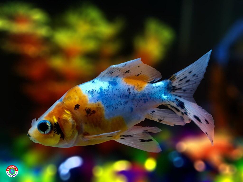 Fish Aquarium Taking Photos Enjoying Nature Nature Eyeem N Flickr