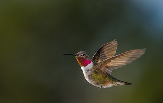 Hummingbird | by AER Wilmington DE