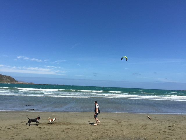 Lyall Bay Man with 2 dogs