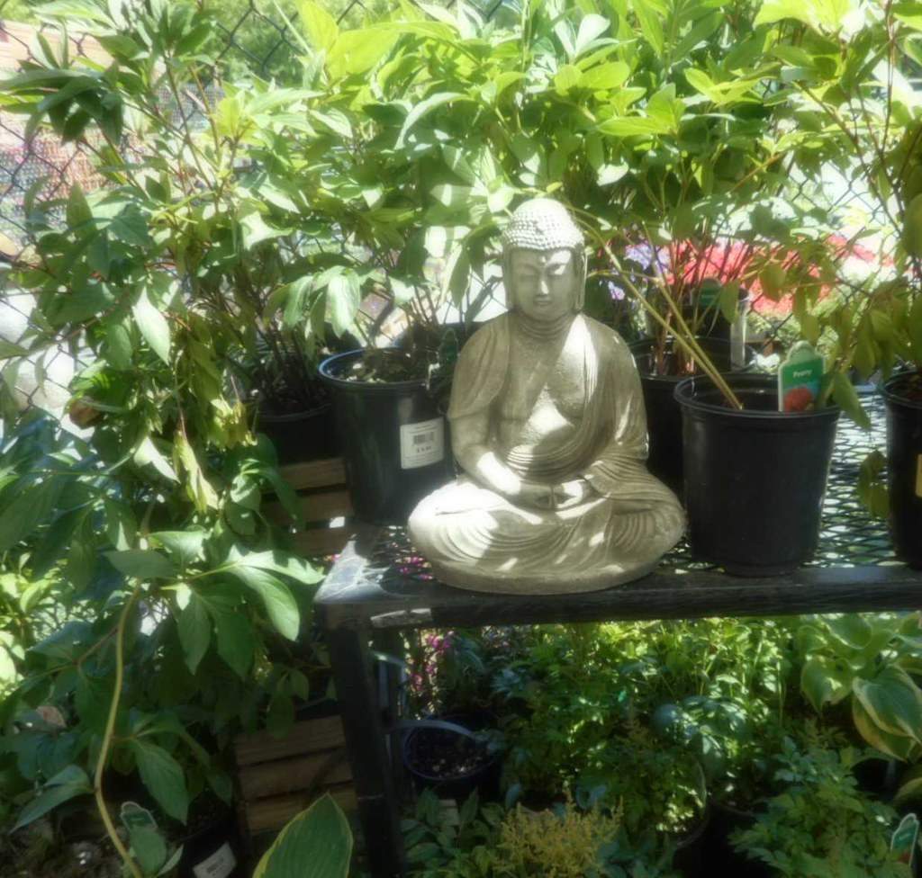 The Buddha at Fred Meyer Garden Center Lake City Store Sea Flickr