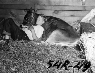 Boy resting with Jersey cow in Livestock building stall | by City of Vancouver Archives