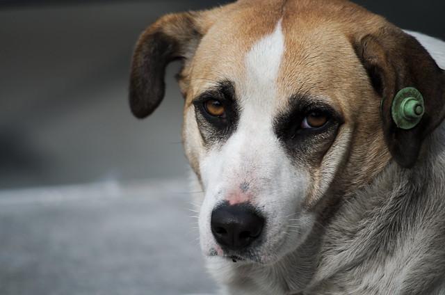 За жорстоке поводження з тваринами тепер загрожує тюрма – Рада прийняла закон