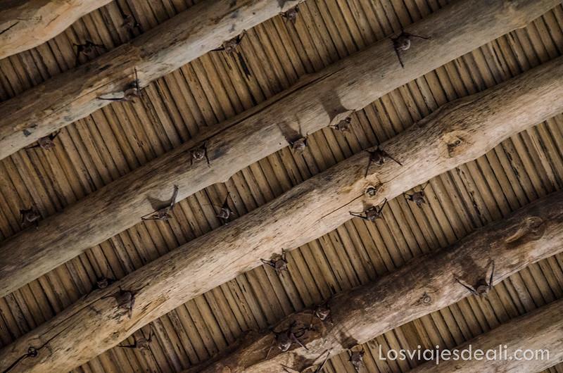 Patrimonio de la Humanidad en Omán murciélagos en Bahla