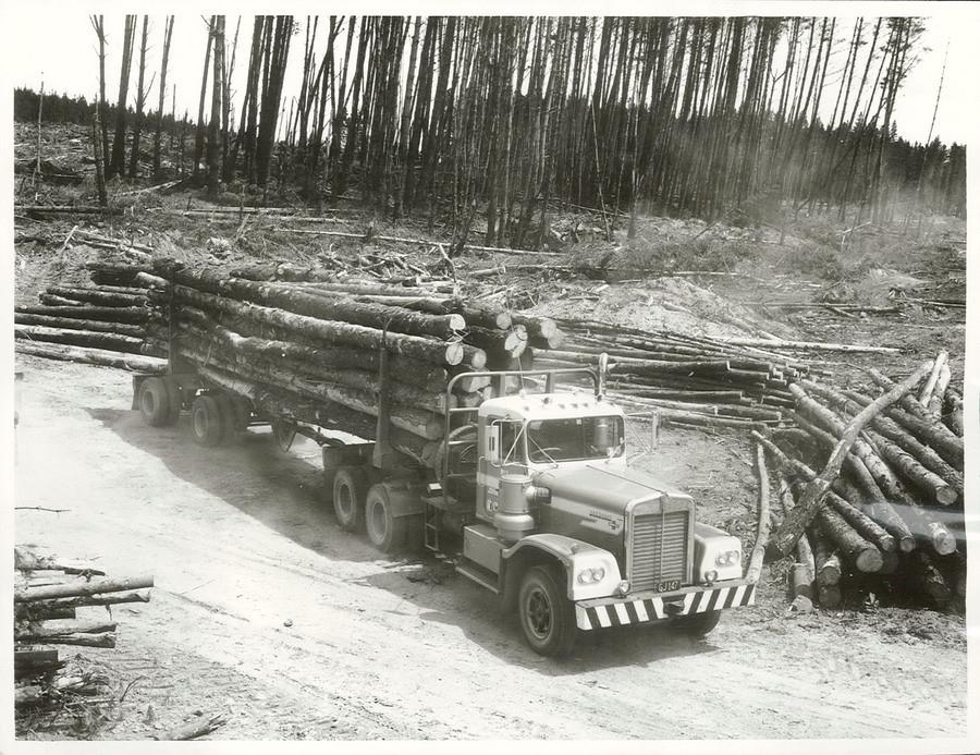 Image result for new zealand logging