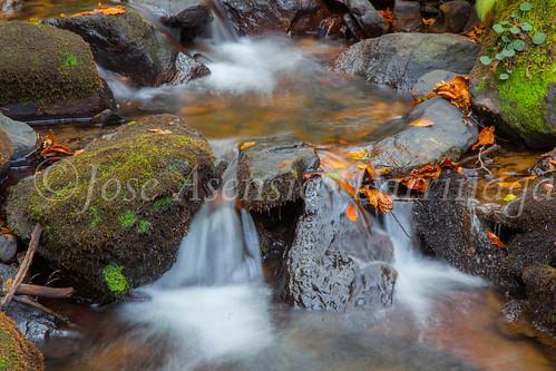 Parque Natural de #Gorbeia #DePaseoConLarri #Flickr      -1458