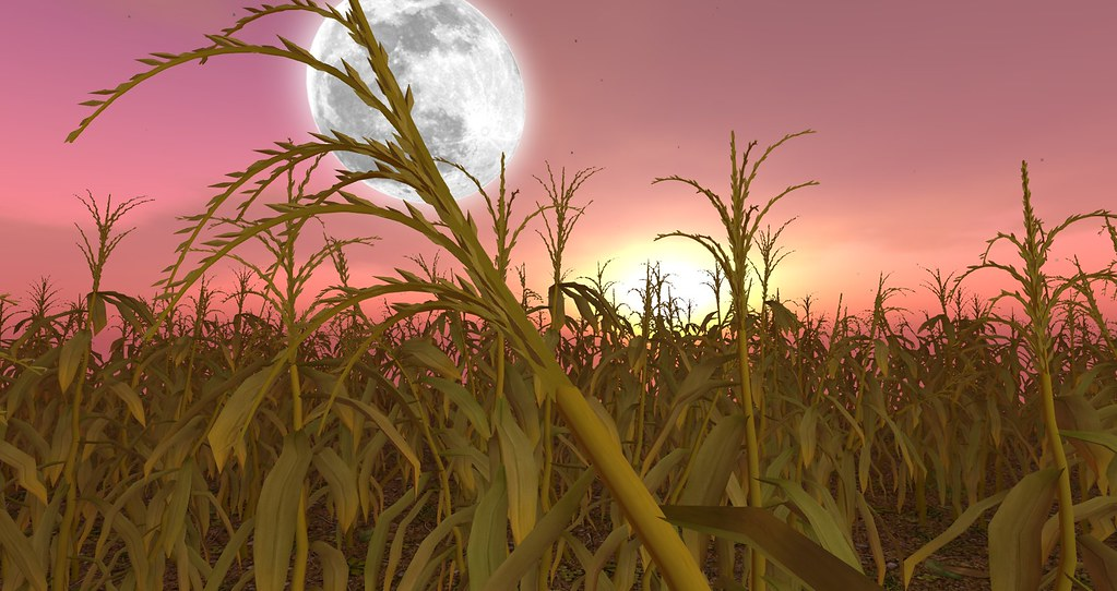 second life halloween corn stalks by lilith heart - Halloween Corn Stalks