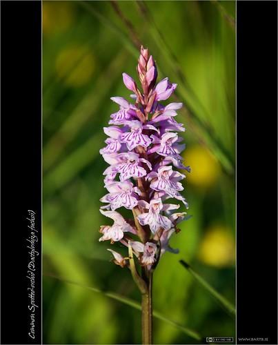 Wild Orchid Spa Mehrauli New Delhi
