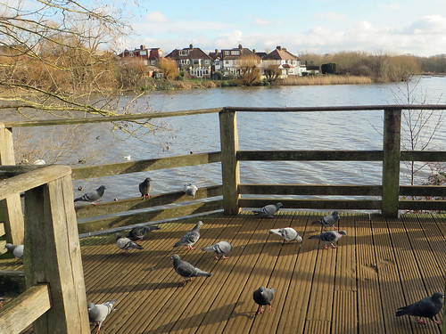 Welsh Harp Reservoir | by diamond geezer