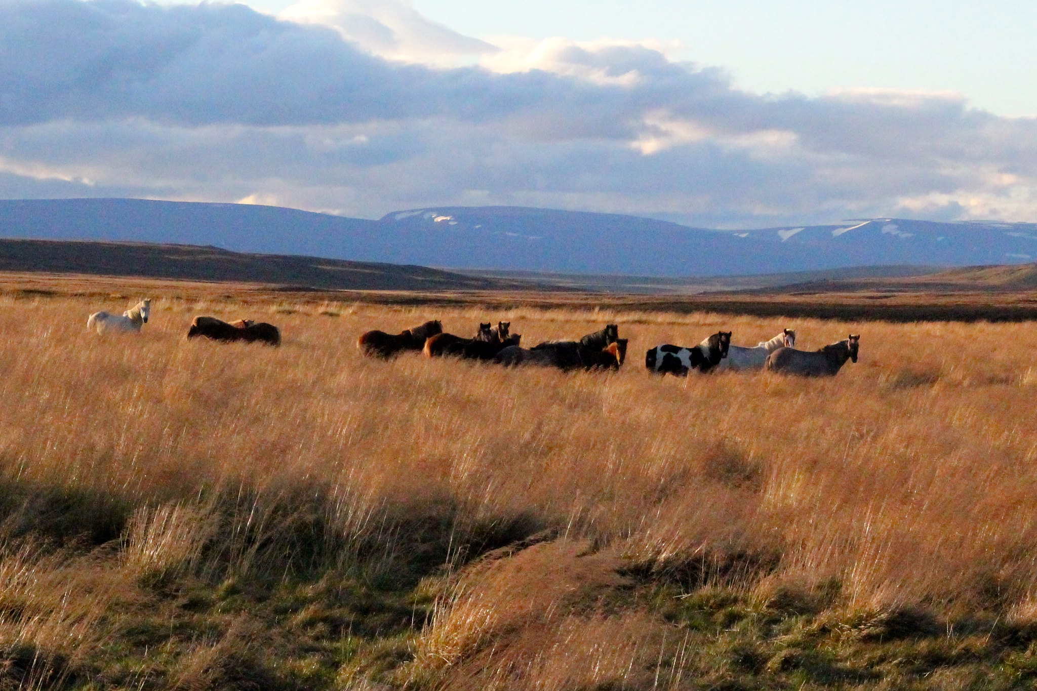 Phoe Travels Icelandic Horse Riding in Myvatn Iceland