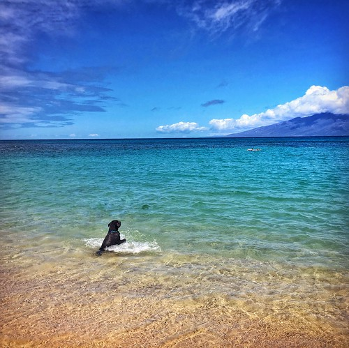Black Dog. Happiness. Moloka'i in view... | by allophile