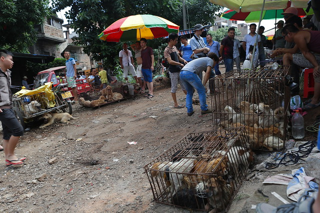dog meat market in Yulin, China