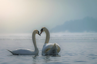 Love | by Ole Petter Rust Photography