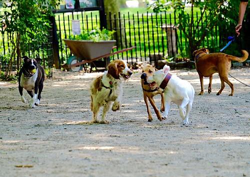 Riverside Park Dog Park