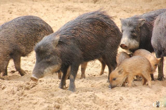 Sonntags-Besuch Zoo Berlin 19.06.201676