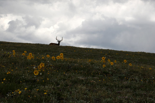 2016 7 16 -  In the Bachelor Herd - TRR - RMNP - 9S3A0645 | by Rags Edward
