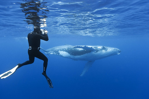 Majestic Whale Encounters10 - pic by Brandon Cole.jpg | by Traveloscopy