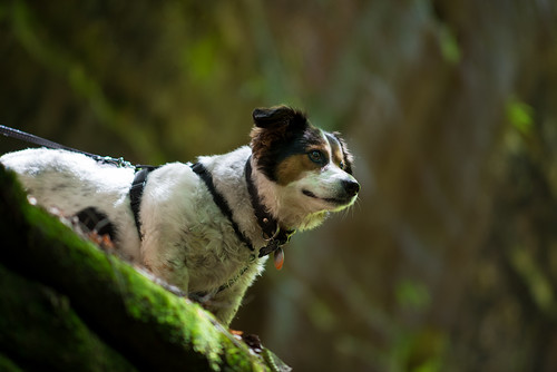 Lucy at Dismals Canyon | by Ronnie Harris