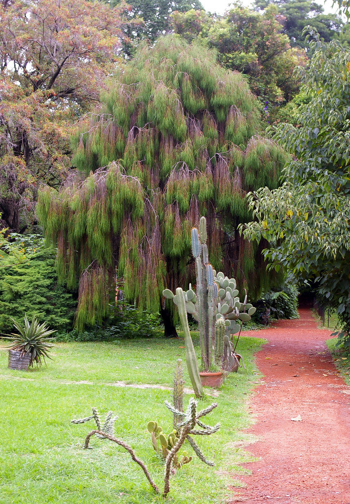 Buenos Aires Botanical Garden, Buenos Aires, Argentina | Flickr