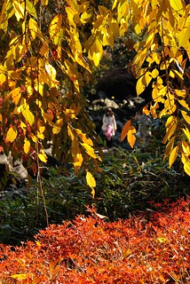 Autumn leaves of Shiratori-garden No.2. | by HIDE@Verdad
