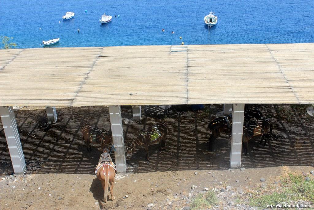 Los burros de Santorini