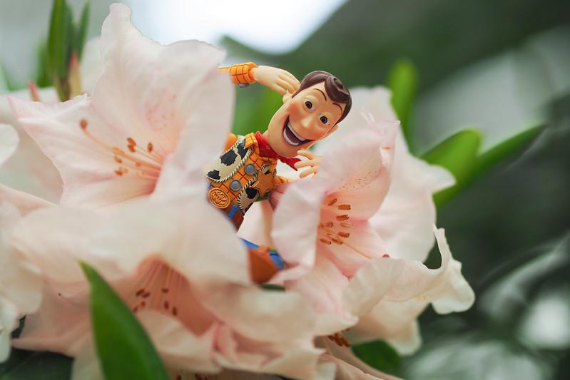 採花賊|Woody 胡迪