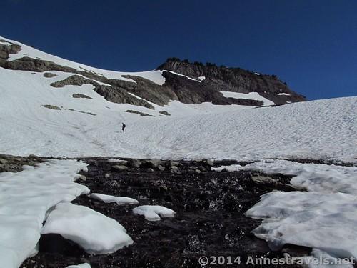 Snowfields on Ptarmigan Ridge near Mt. Baker, Washington