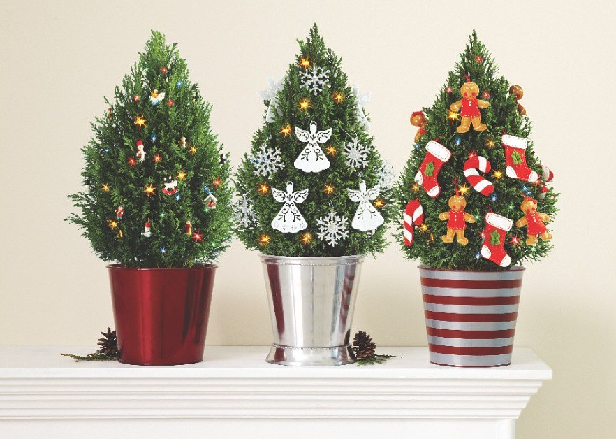 Miniature European Cypress Christmas Trees With Lights Gin Flickr - Miniature Christmas Trees With Lights