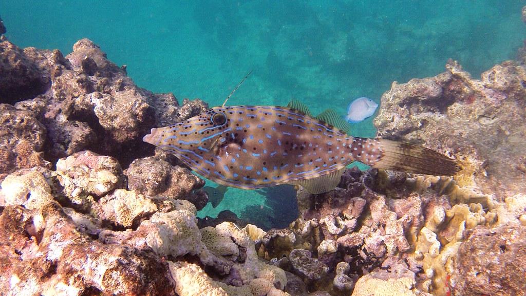 Snorkeling at Rock Key, Key West