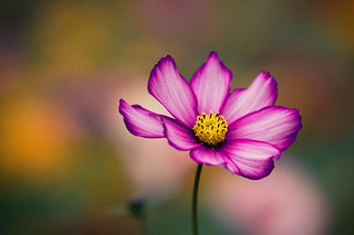 Petal Perfect | by BryonLippincott