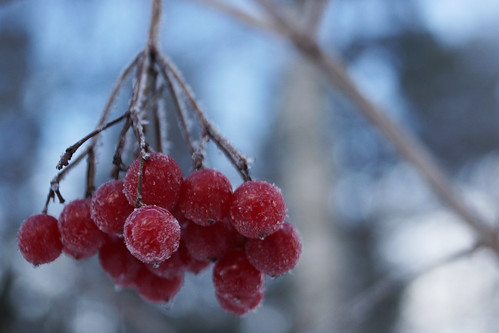 Frost - 1 | by randihausken