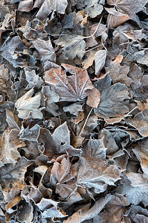 leaf frost | temple newsam | by John FotoHouse