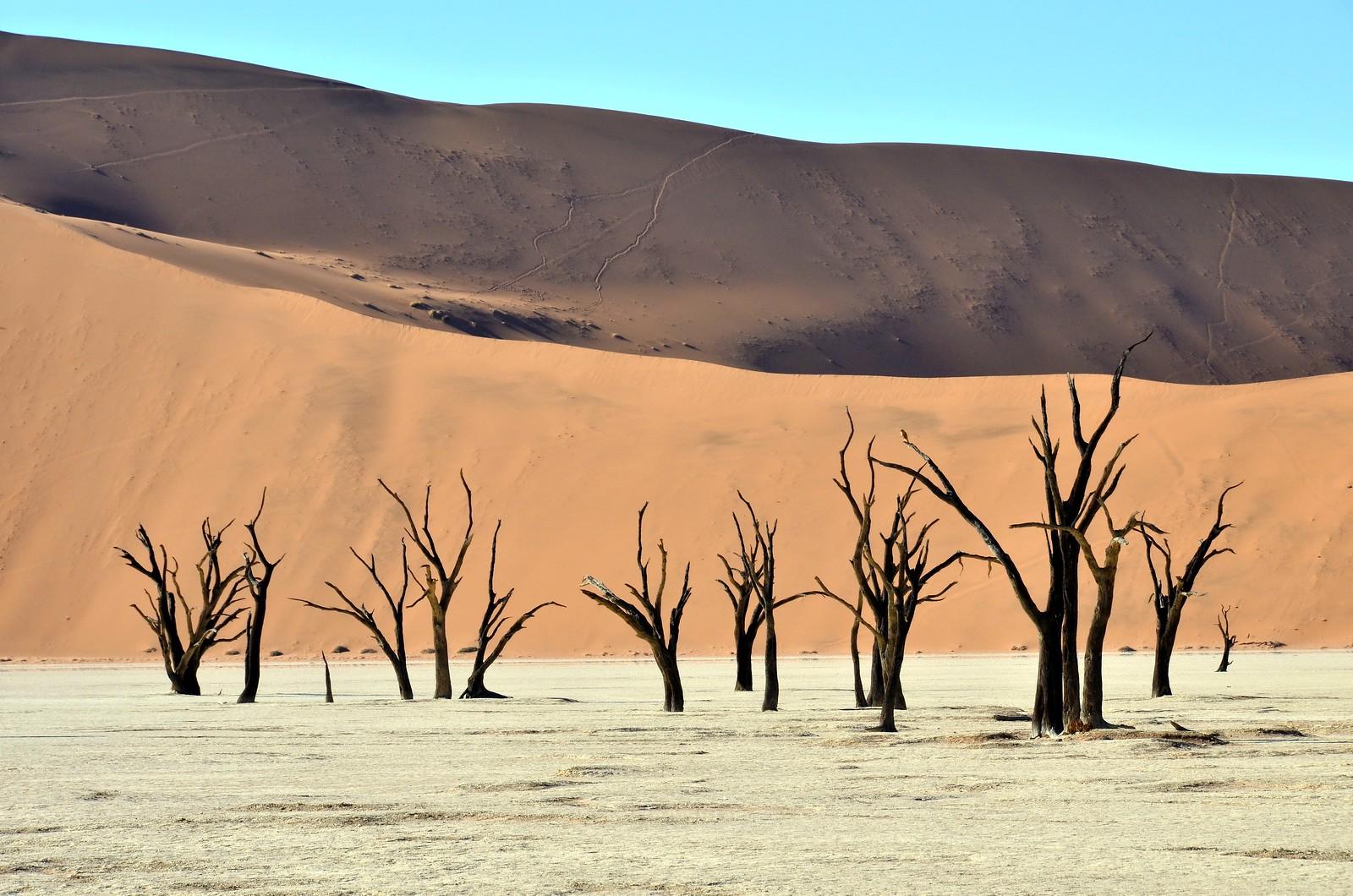 Namibia (337)