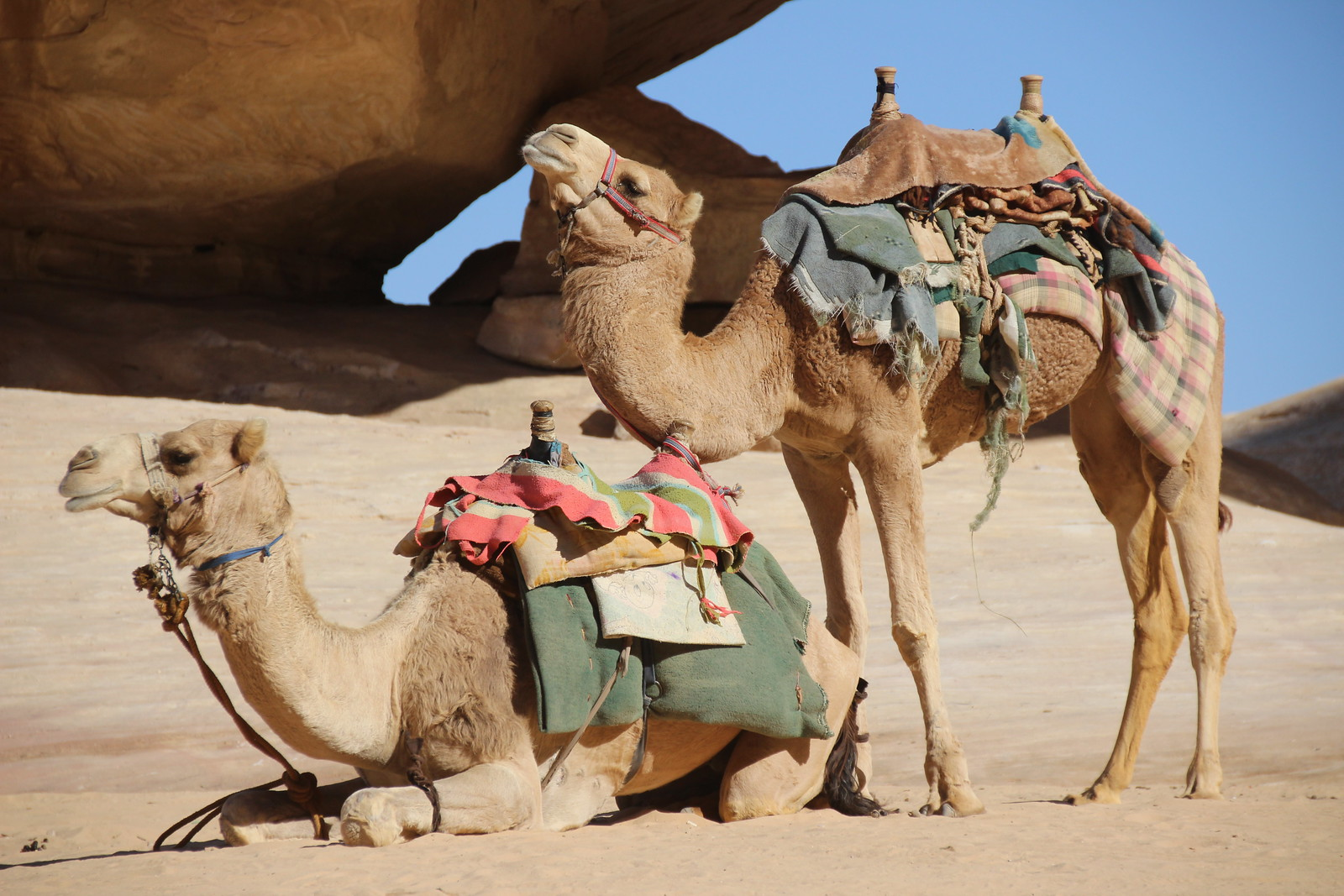 CAMELSPOTTING IN WADI RUM