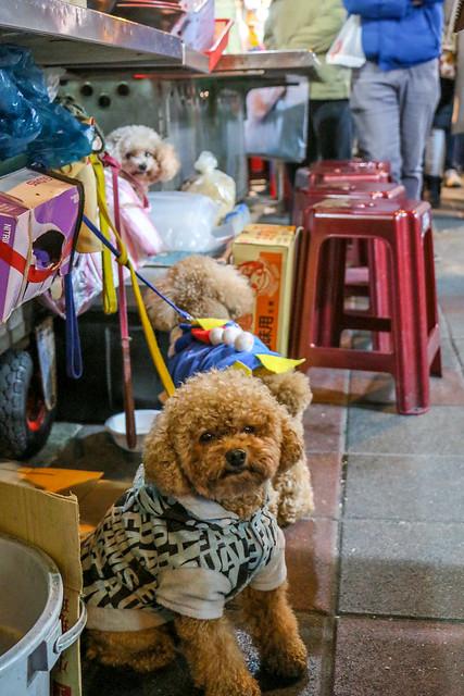 Lovely toy poodles at Ningxia nightmarket, Taipei 台北、寧夏夜市のトイプードルたち