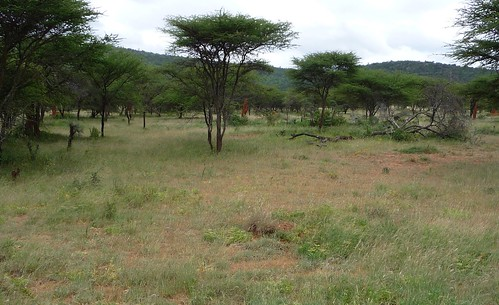 Borana_grazing_enclosure