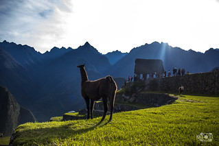 #MachuPicchu #Peru Peru