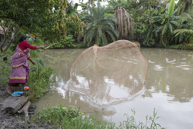 Bangladeshi woman throw net into her pond, Khulna. Photo by Yousuf Tushar