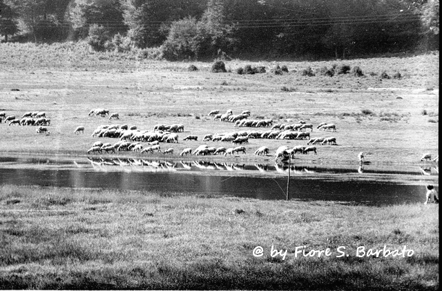 Fiori Bagnoli Irpino : Bagnoli irpino av 1970 lago laceno. wikipedia: bagnoliu2026 flickr