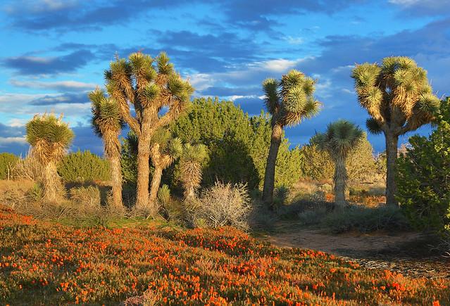 Antelope Valley California