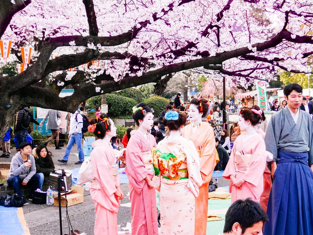 Les cerisiers en fleur ! Le Hanami. 16765865116_d908150567_b