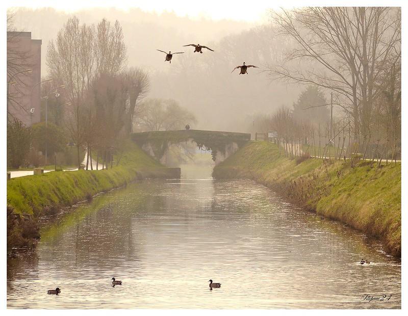 Le vieux pont de lierre sous la puie 16210601814_bff604f61a_c