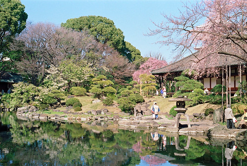 sakura, denboin garden Senso-ji Asakusa
