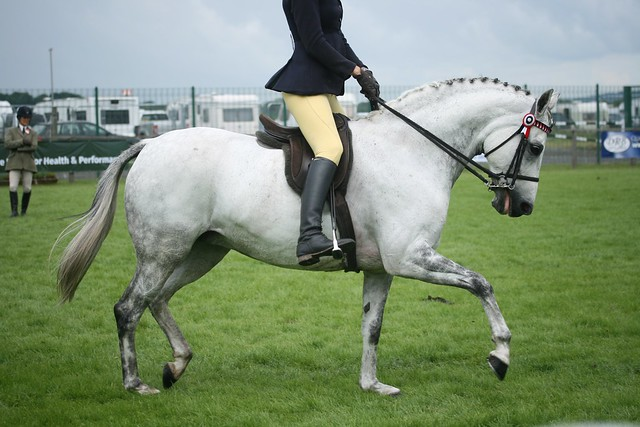 Anglo and Partbred Arabian