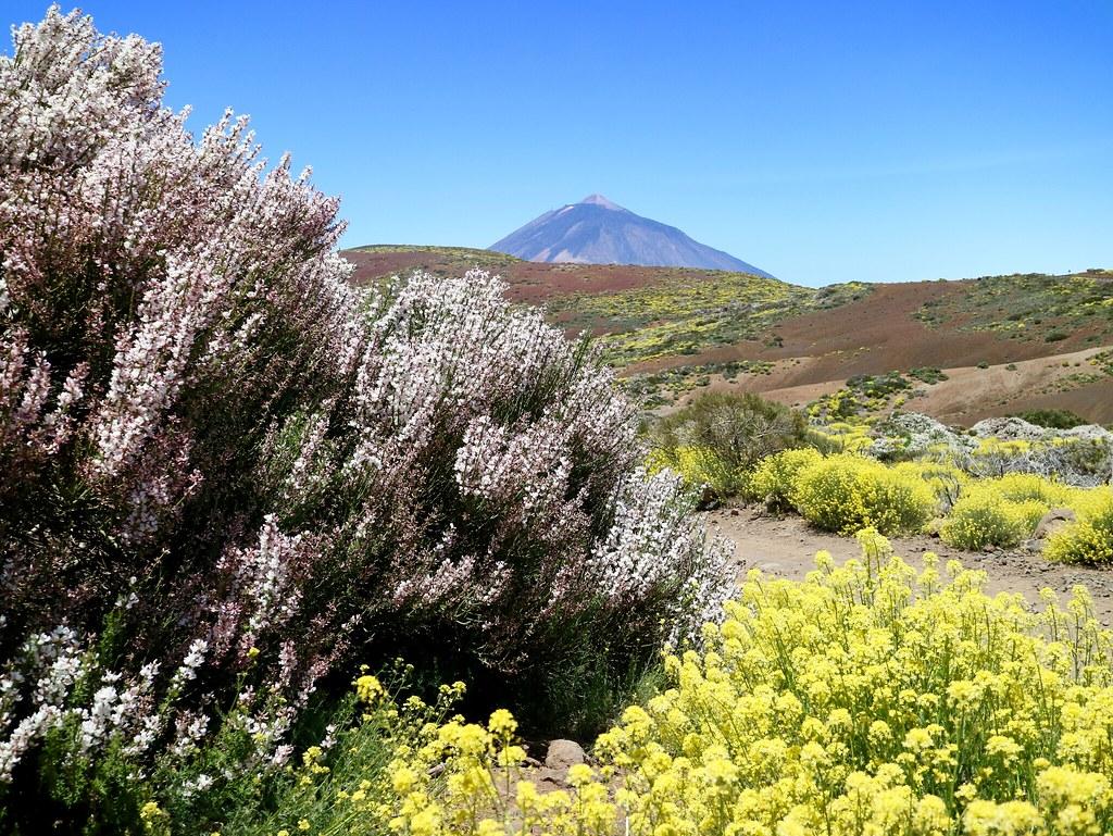 Plantas del Parque Nacional del Teide