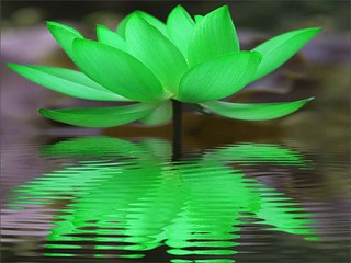 Green Lotus Reflection | by maf04