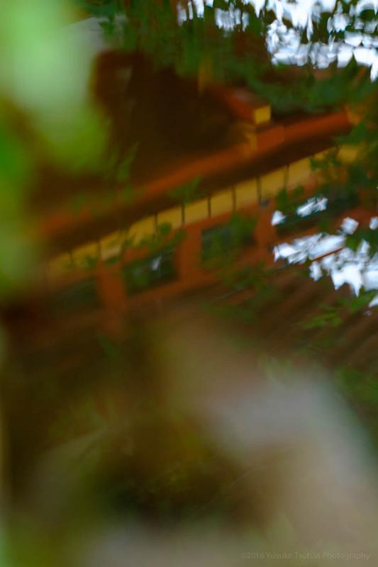 Leica Elmarit 90mm F2.8