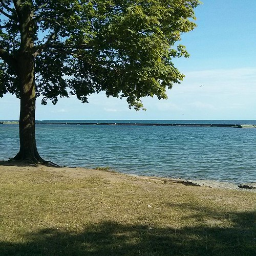 Out at the lake #toronto #lakeontario #palaisroyale