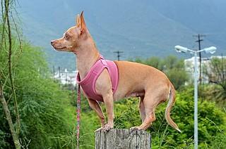 dog-1033158_640
